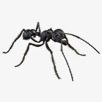 rigged bullet ant 3d model