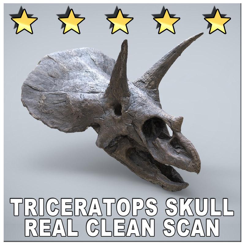 maya scan triceratops skull museum