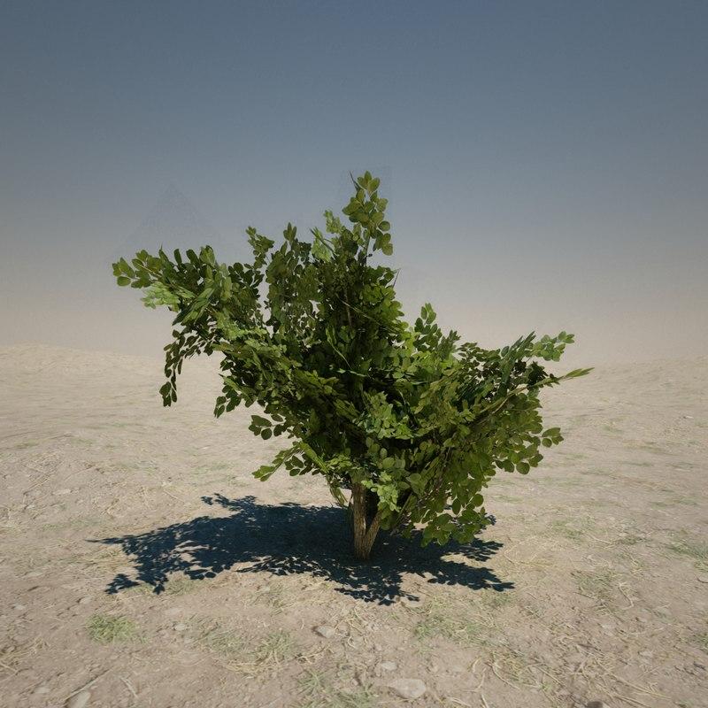 3d model medium bush