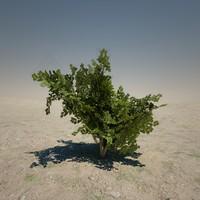 Medium Bush