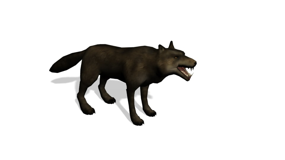 3d wolf animations model
