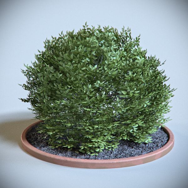 3d model decoration shrub