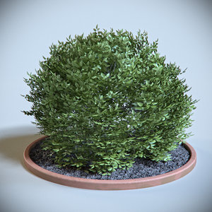 3d model decoration shrub