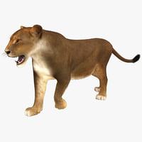 lioness pose 2 fur 3d model