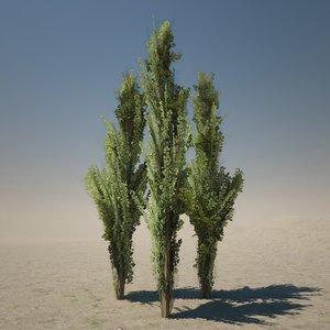 cypress tree 3d model