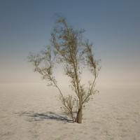 brown desert tree 3d 3ds