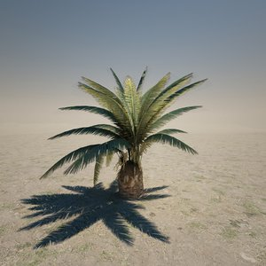 3d short palm tree model