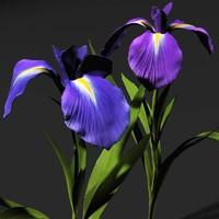 iris flowers 3d model