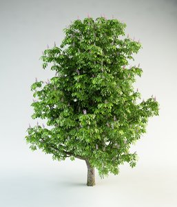 horse-chestnut flowering chestnut 3d model