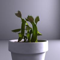 maya carnivorous plants