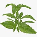 Herbs 3D models