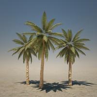 3dsmax tall palm