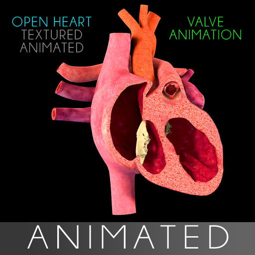 open heart section animation 3d model