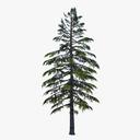 spruce 3D models