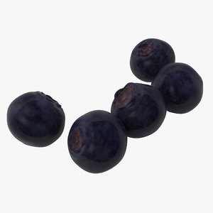 bilberries berries 3d model