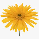 daisy 3D models