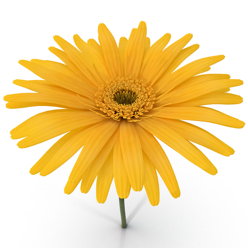 yellow daisy 3d c4d