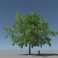 Tree Oak V10