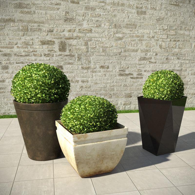 shrubs pots max