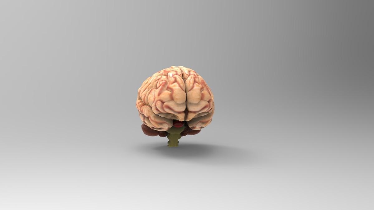brain max free