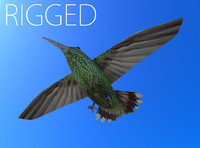 rigged humming bird ma