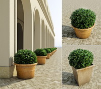 bushes pots 2 3d model