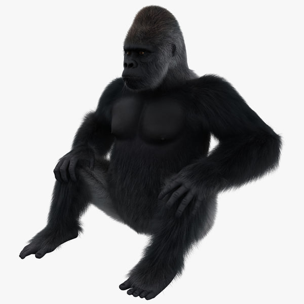 3d model gorilla pose 3 fur