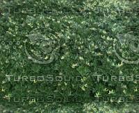 green meadow.jpg