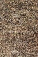 dried hay.jpg