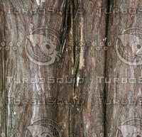 light bark.jpg