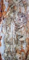 pealing bark.jpg