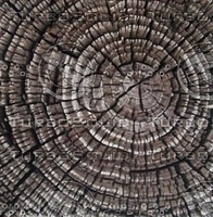 tree trunk rings.jpg