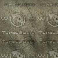 gray animal skin.jpg