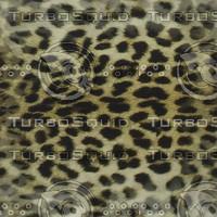 leopard skin.jpg