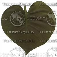 green leaf5.jpg