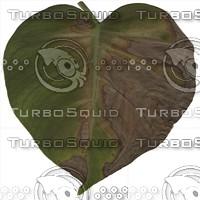 green leaf6.jpg