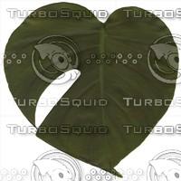 green leaf7.jpg
