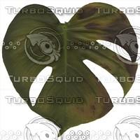 green leaf8.jpg