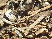 cut wood1.jpg