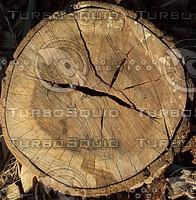 tree rings.jpg