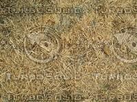 dead grass.jpg