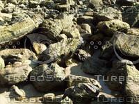 rocky beach.jpg