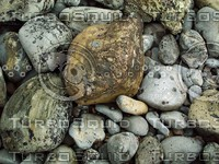 speckled rocks.jpg