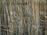 long grass2.jpg