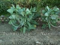 two plants.jpg