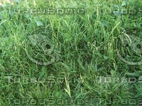 lush grass2.jpg