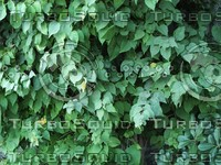 green leaves.jpg