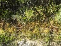 wild grass.jpg