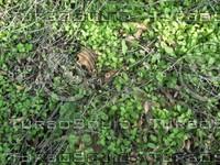 leaves and sticks.jpg