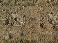 racoon prints sand.jpg